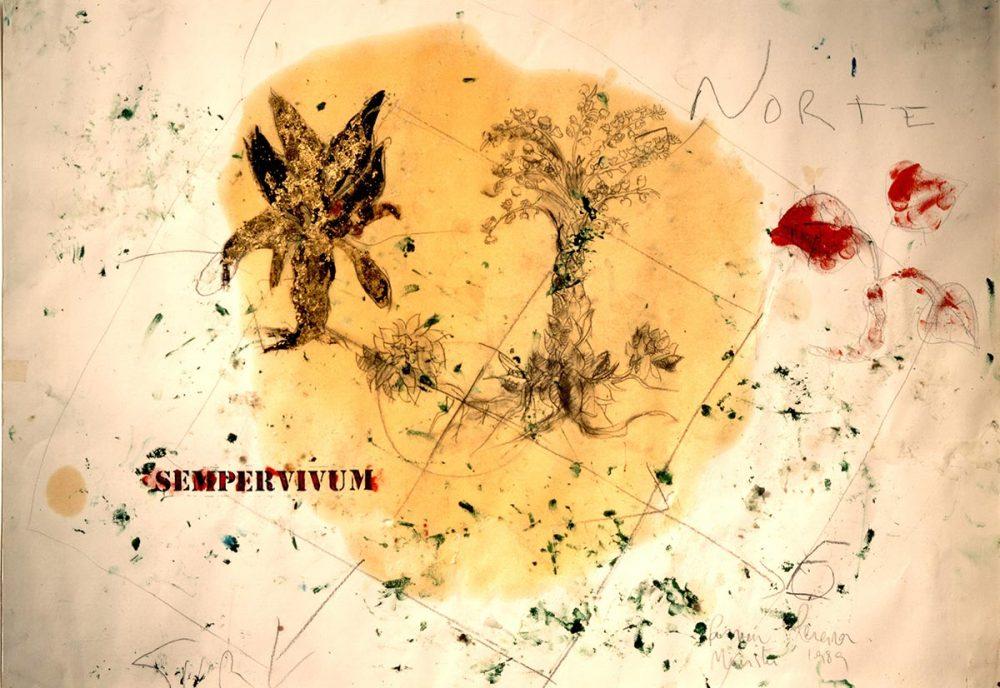 30_METAFISICA_SIN_CIELO_SEMPERVIVUM_MAIUS